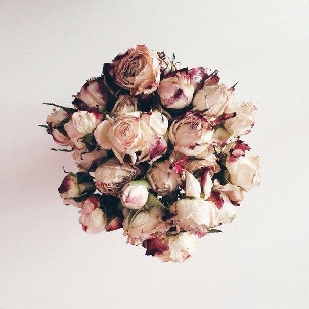 Моя роза...