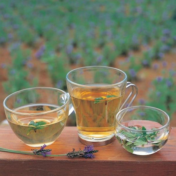 Вся польза травяных напитков