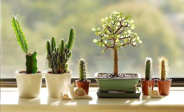 Ваше счастливое комнатное растение