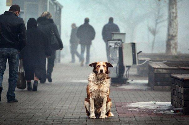 Заглянуть в глаза собаке