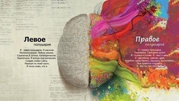Зрим в корень: как развивать полушария мозга?